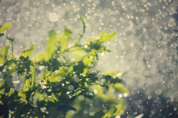 Wasser als geistliches Symbol für Wachstum, Reinheit, Segen